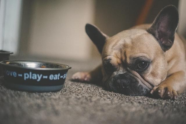 寵物餵食器-狗
