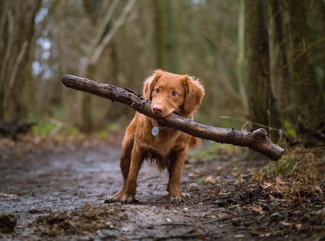 狗飼料-年齡