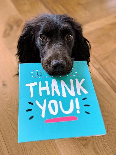 狗飼料-感謝